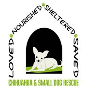 Chihuahua & Small Dog Rescue, Inc