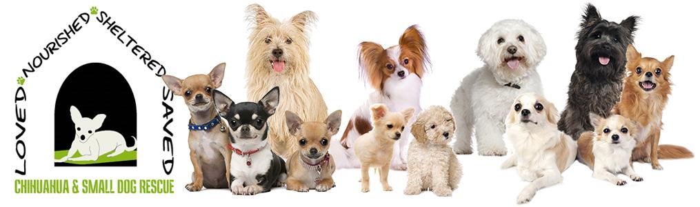 Small Dog Rescue In Colorado Chihuahua And Small Dog Rescue